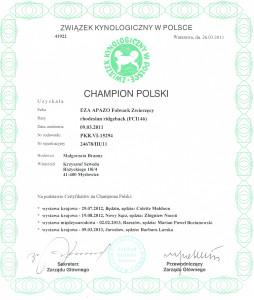dyplom championa Polski_cr